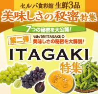 セルバ食彩館 生鮮3品 美味しさの秘密特集『第二弾 ITAGAKI特集』