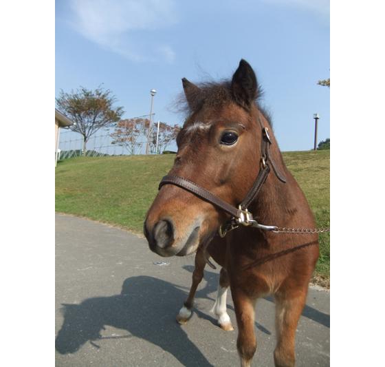 130711_horse.jpg