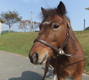 【7月8月9月】乗馬クラブクレインからお馬の「ぷりっつくん」「つくしちゃん」がやってきます