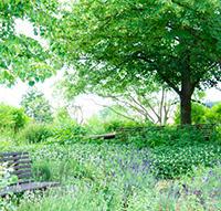 生活の木『薬香草園フェア』